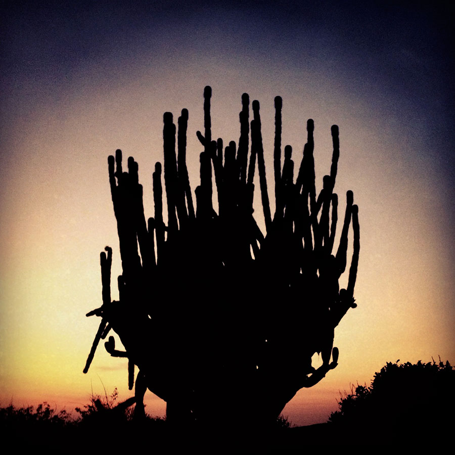 Silhouette of a cactus in Huatulco, Mexico